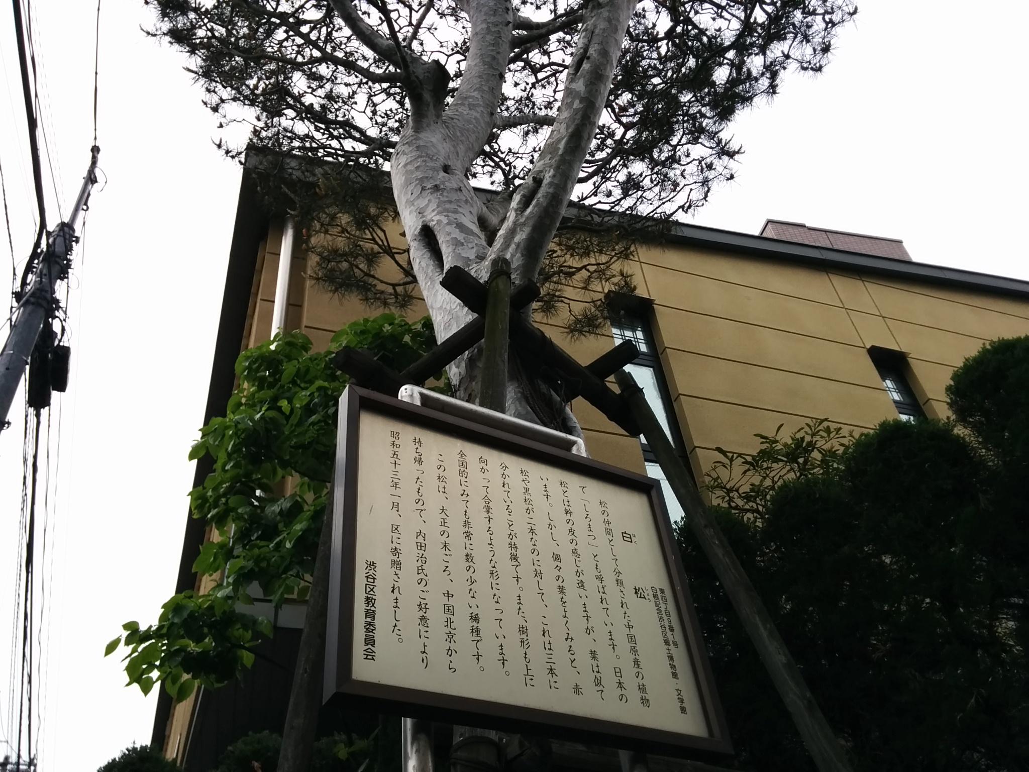 白松(ヨコ)