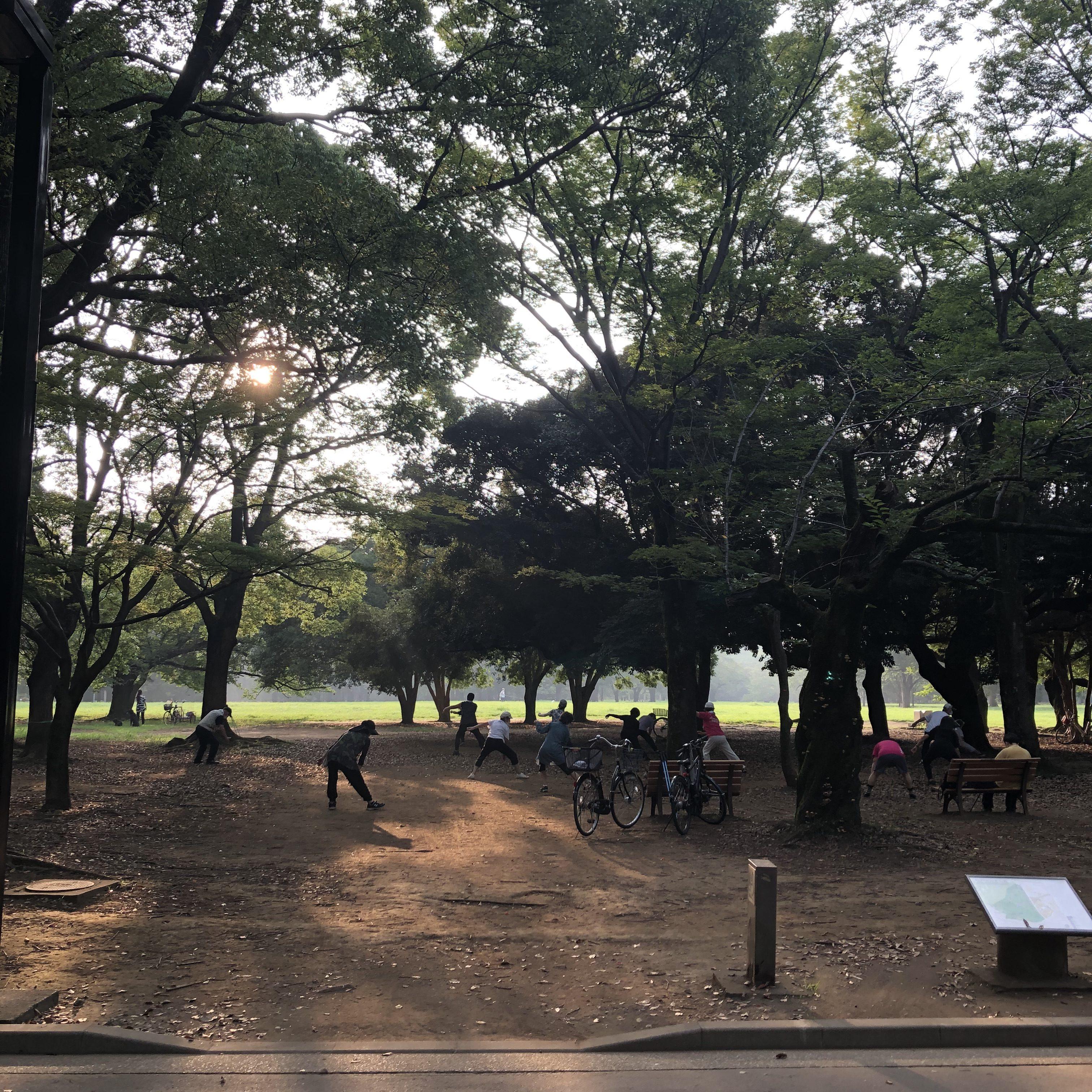 公園 ドッグラン 代々木